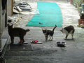 Cats of Houtong, #0048