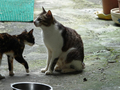 Cats of Houtong, #0049