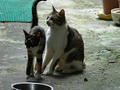 Cats of Houtong, #0050