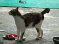 Cats of Houtong, #0051
