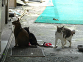 Cats of Houtong, #0053