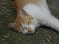 Cats of Houtong, #9340