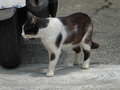 Cats of Houtong, #0054