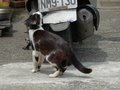 Cats of Houtong, #0055