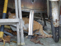 Cats of Houtong, #9389