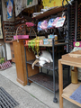 Cats of Houtong, MoggyCafe, #9391