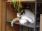 Cats of Houtong, MoggyCafe, #9392