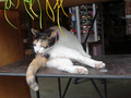 Cats of Houtong, MoggyCafe, #9394