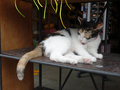 Cats of Houtong, MoggyCafe, #9396