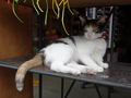 Cats of Houtong, MoggyCafe, #9397