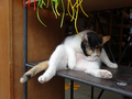Cats of Houtong, MoggyCafe, #9401