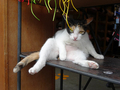Cats of Houtong, MoggyCafe, #9402