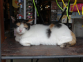 Cats of Houtong, MoggyCafe, #9408