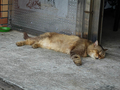 Cats of Houtong, MoggyCafe, #9415