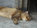 Cats of Houtong, MoggyCafe, #9416