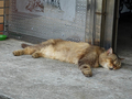 Cats of Houtong, MoggyCafe, #9417
