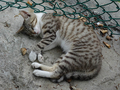 Cats of Houtong, #9518