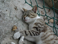 Cats of Houtong, #9526