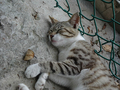 Cats of Houtong, #9527