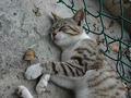 Cats of Houtong, #9528