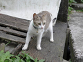 Cats of Houtong, #9552