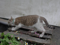 Cats of Houtong, #9553