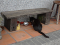 Cats of Houtong, #9577