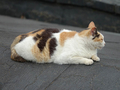 Cats of Houtong, #0057