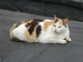 Cats of Houtong, #0058
