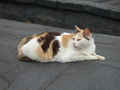 Cats of Houtong, #0061