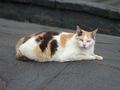 Cats of Houtong, #0062