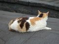 Cats of Houtong, #0063