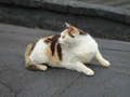 Cats of Houtong, #0064