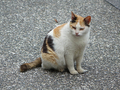 Cats of Houtong, #9582