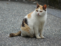 Cats of Houtong, #9583