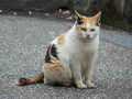 Cats of Houtong, #9584