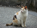Cats of Houtong, #9585