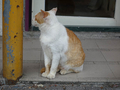 Cats of Houtong, #9586