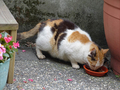 Cats of Houtong, #9592
