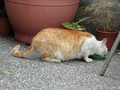Cats of Houtong, #9594