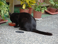 Cats of Houtong, #9596