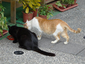 Cats of Houtong, #9601