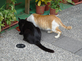 Cats of Houtong, #9602