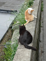 Cats of Houtong, #9612