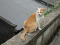 Cats of Houtong, #9613