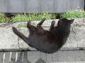 Cats of Houtong, #9615