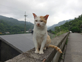 Cats of Houtong, #9617