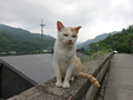 Cats of Houtong, #9618