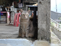 Cats of Houtong, #9653