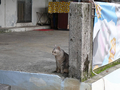 Cats of Houtong, #9656